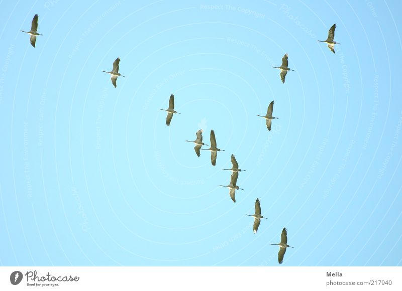 Nature Sky Blue Winter Animal Autumn Movement Freedom Air Together Bird Flying Free Group of animals Climate Longing