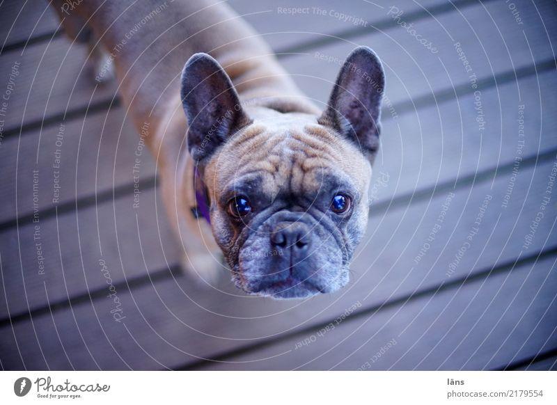 I'm all ears Animal Dog 1 Observe Listening Stand Cool (slang) Power Brave Attentive Watchfulness Unwavering Curiosity Interest Mistrust Expectation Upward