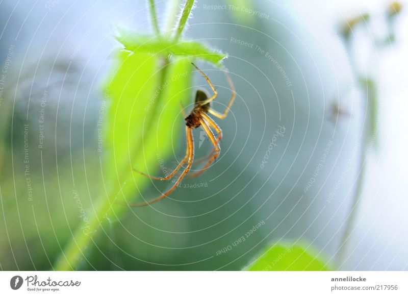 Nature Green Plant Summer Leaf Animal Spring Bright Fear Environment Sit Fresh Insect Observe Stalk Hang