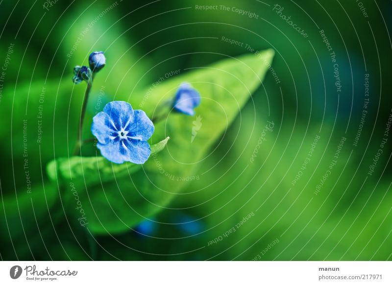 Nature Beautiful Plant Summer Leaf Emotions Blossom Spring Flower Light Forget-me-not