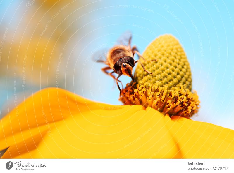 A place in the sun Nature Plant Animal Sky Summer Beautiful weather Tree Leaf Blossom Garden Park Meadow Wild animal Bee Animal face Wing 1 Blossoming Fragrance
