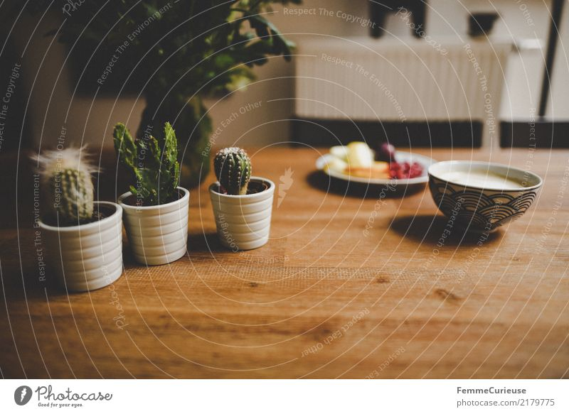 Home_42 House (Residential Structure) Detached house Living or residing Decoration Cactus Wooden table Coffee cup Heater Colour photo Interior shot