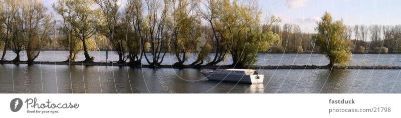 Rheinauen (Panorama) Watercraft Tree Rheingau Germany Rhine autumn germany River