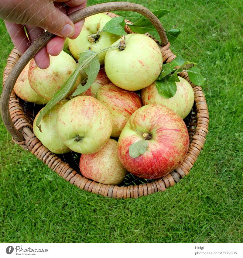 Nature Green Hand Red Leaf Healthy Meadow Natural Garden Food Brown Fruit Lie Fresh Authentic Joie de vivre (Vitality)