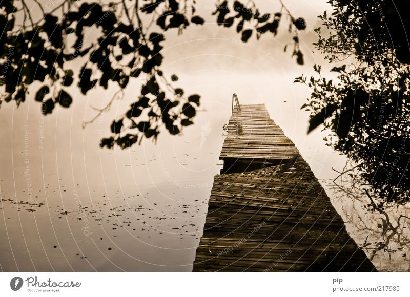 Nature Water Calm Leaf Autumn Wood Fog Environment Wet Fresh Bushes Branch Footbridge Lakeside Jetty Ladder