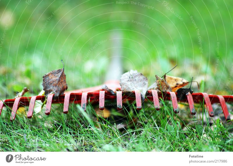 Nature Green Plant Red Leaf Meadow Autumn Grass Garden Environment Natural Elements Autumn leaves Worm's-eye view Broomstick Pitchfork