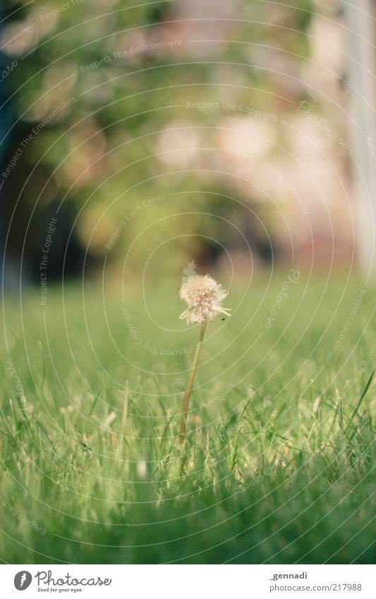 The focus is on Environment Nature Plant Earth Autumn Beautiful weather Flower Leaf Blossom Wild plant Dandelion Old Fragrance Simple Uniqueness Green Power
