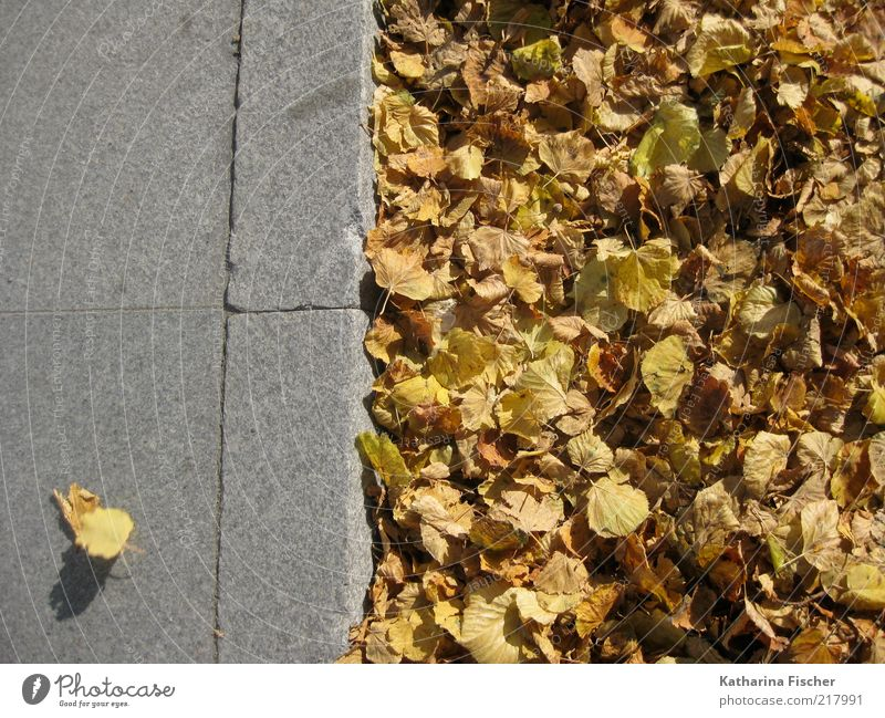...not adapted ! Leaf Street Lanes & trails Stone Concrete Yellow Gray Sidewalk Arrangement Brown Autumn Autumnal colours Autumn leaves Road traffic Seasons