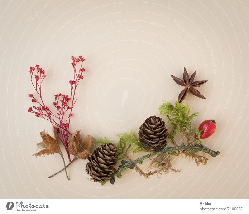 Nature Plant Green Red Environment Autumn Natural Brown Decoration Moss Wild plant Rose hip Star aniseed Beechnut Fir cone
