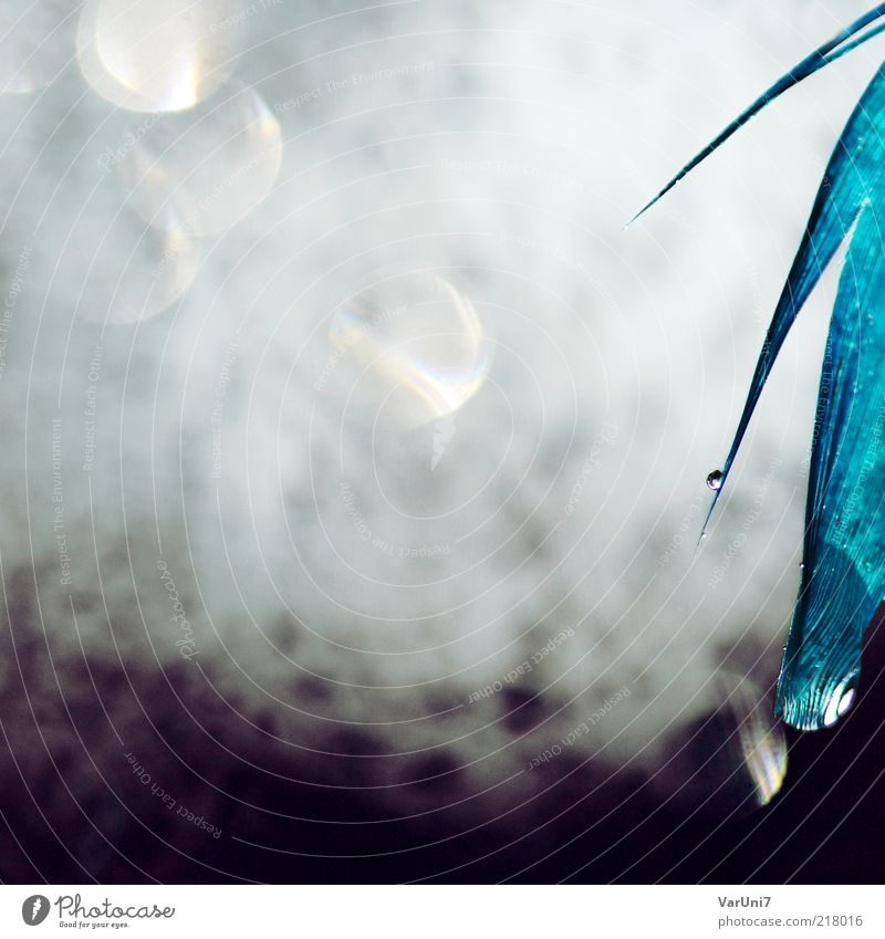 Water Beautiful White Blue Dream Wet Modern Esthetic Near Drop Feather Violet Uniqueness Fantastic Exceptional Abstract