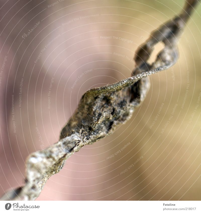 Nature Plant Leaf Autumn Brown Environment Natural Spiral Shriveled Blur Macro (Extreme close-up) To dry up Wild plant