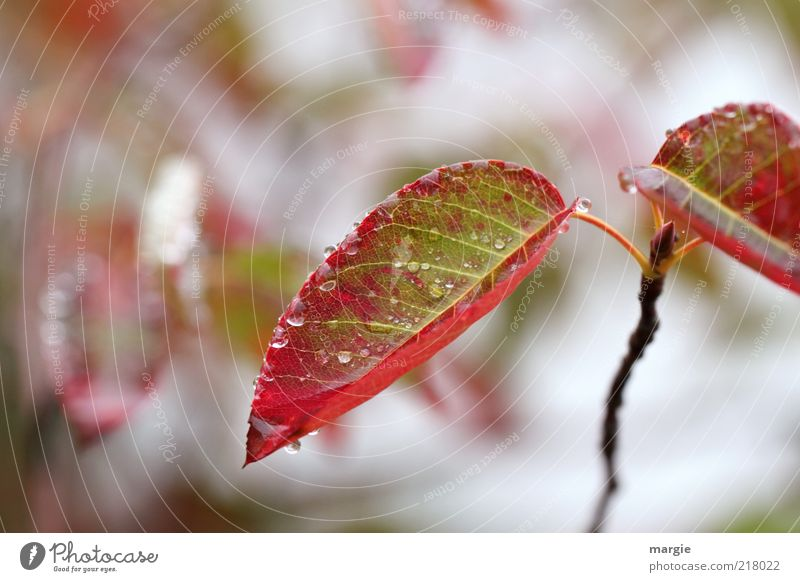 Nature Green Plant Red Winter Calm Leaf Autumn Blossom Ice Moody Drops of water Growth Frost Change Transience