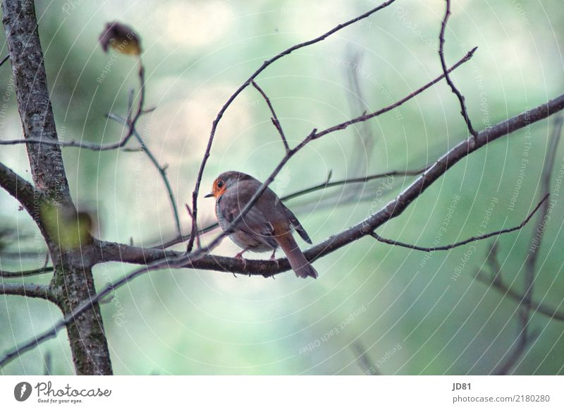 Pieper Chat Nature Animal Autumn Forest Bird Animal face Wing 1 Cold Natural Blue Multicoloured Green Sparrow Colour photo Subdued colour Exterior shot Close-up
