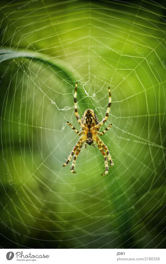 Nature Summer Green Animal Yellow Autumn Spring Natural Garden Wait Observe Creepy Disgust Spider