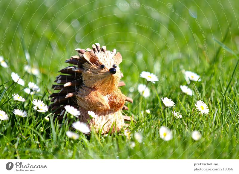 hedgehogs Nature Summer Beautiful weather Flower Grass Blossom Foliage plant Daisy Garden Meadow Animal Wild animal Animal face Hedgehog 1 Toys Decoration