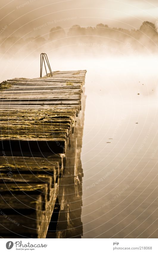 at the end of time Environment Nature Elements Water Autumn Fog Lakeside Mecklenburg-Western Pomerania Wood Wanderlust Calm Morning Wooden board Ladder