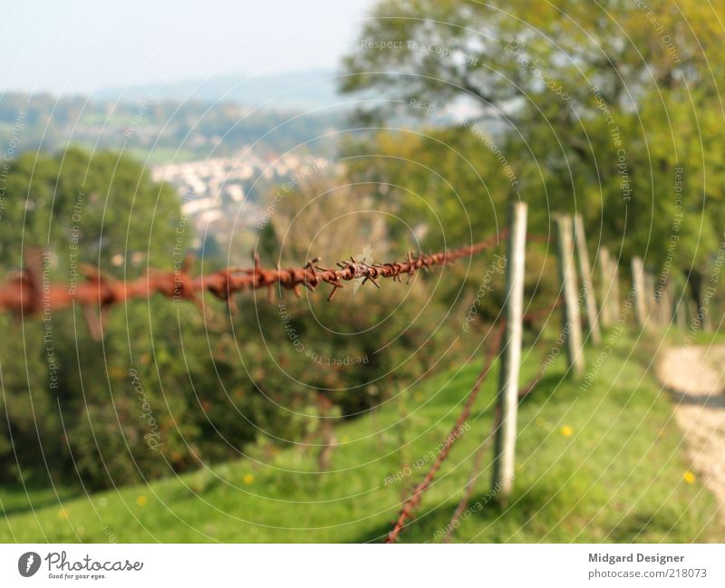 Spiked wire fence Nature Landscape Summer Autumn Weather Beautiful weather Tree Grass Meadow Hill Colour photo Exterior shot Experimental Deserted