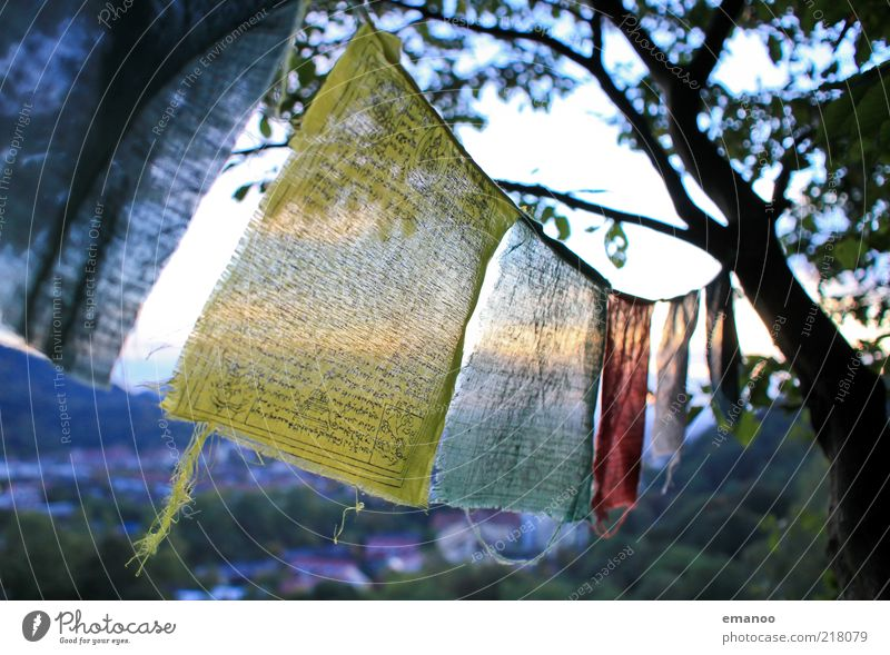 Nature Tree Yellow Freedom Movement Landscape Religion and faith Wind String Back-light Hang up Compassion Judder Multicoloured Shadow Light