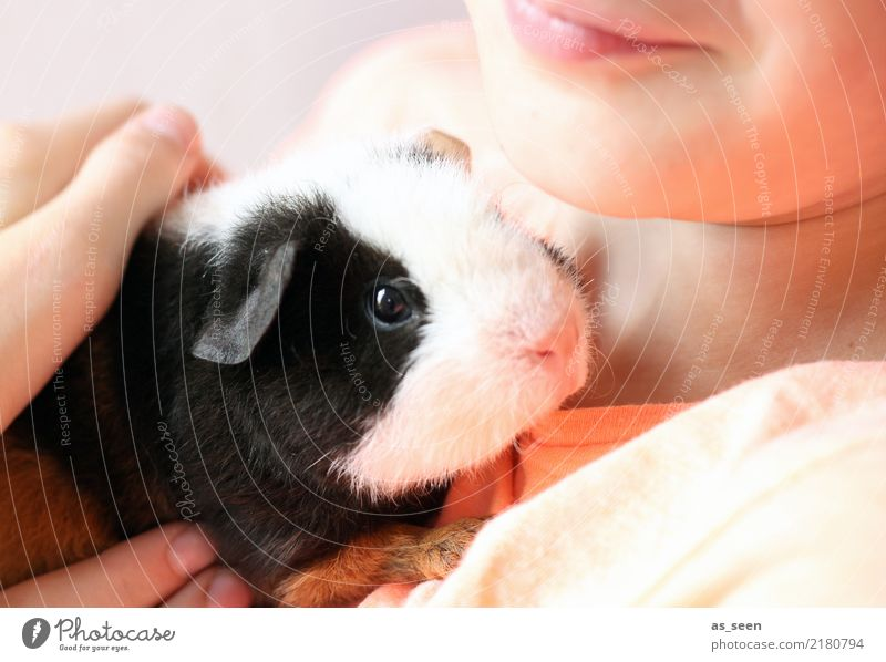 Humans and animals Child Infancy Animal Pet Animal face Pelt Zoo Petting zoo Guinea pig Nose Eyes 1 To hold on Communicate Love Small Cute Soft Pink Black White