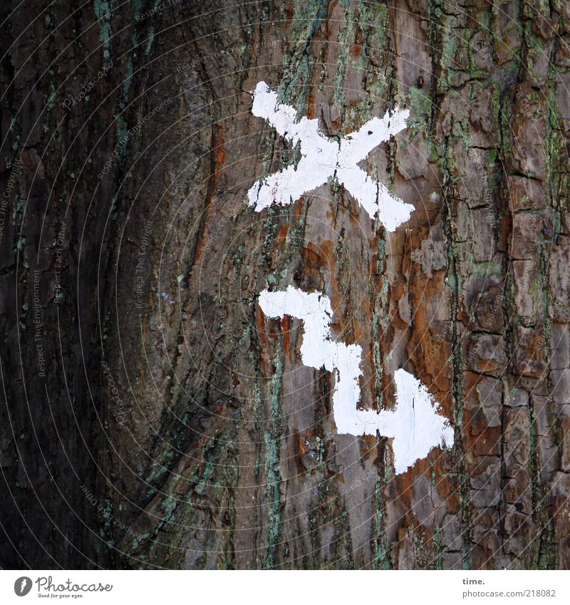 The Möllner Stadtgeistes route map Environment Nature Plant Tree Sign Crucifix Arrow White Colour Tree bark Checkmark Colour photo Subdued colour Detail