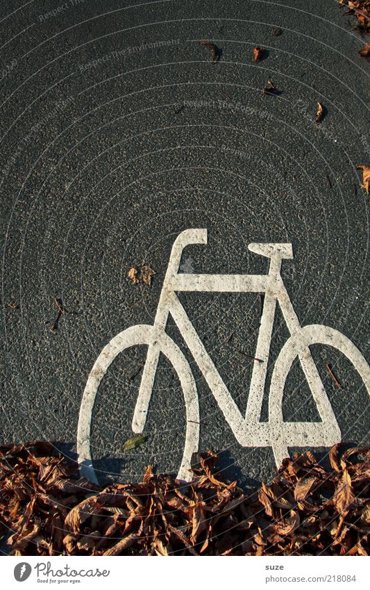 White Leaf Street Autumn Gray Brown Bicycle Funny Signs and labeling Transport Asphalt Sign Illustration Diagonal Autumn leaves Pictogram