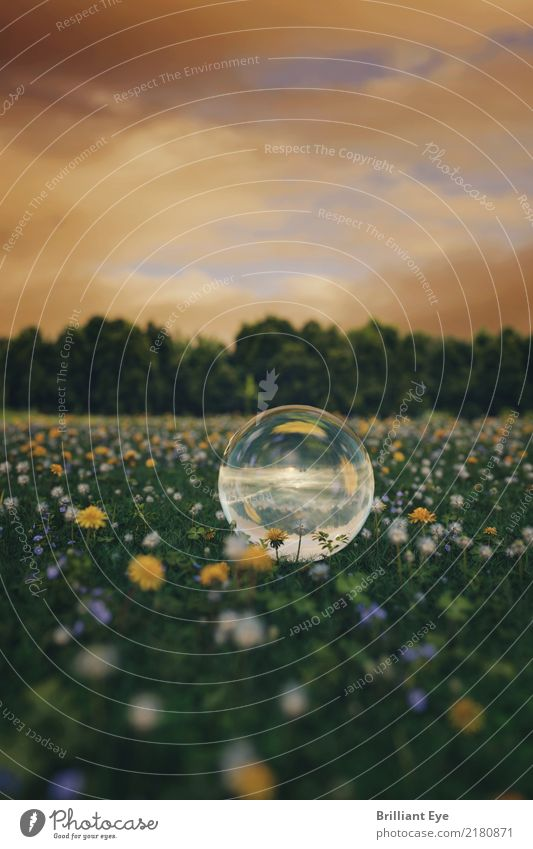 Nature Plant Summer Landscape Flower Environment Meadow Natural Jump Fresh Glass Beautiful weather Round Near Sphere Sustainability