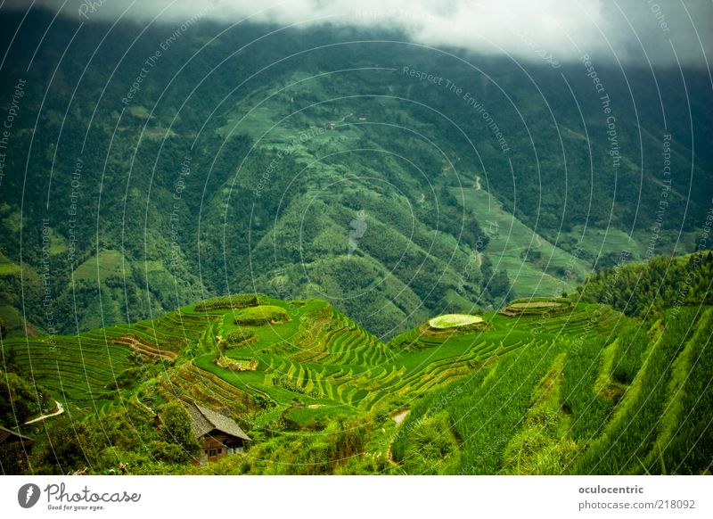 from above Environment Nature Landscape Plant Clouds Storm clouds Bad weather Rice Travel photography Paddy field Growth Authentic Cliche Green Guilin China