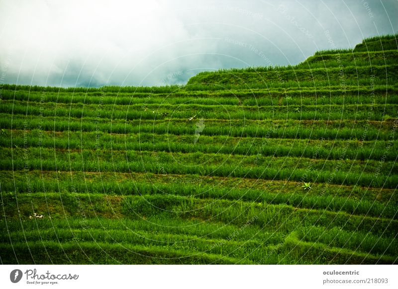 restless journey up to rice Environment Nature Landscape Plant Sky Bad weather Rice Travel photography Paddy field Field Old Growth Free Cold Green Tourism