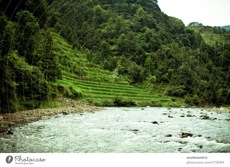 The mountain calls Environment Nature Landscape Plant Water Sunlight Summer Weather Foliage plant Agricultural crop Rice Travel photography Brook Guilin China