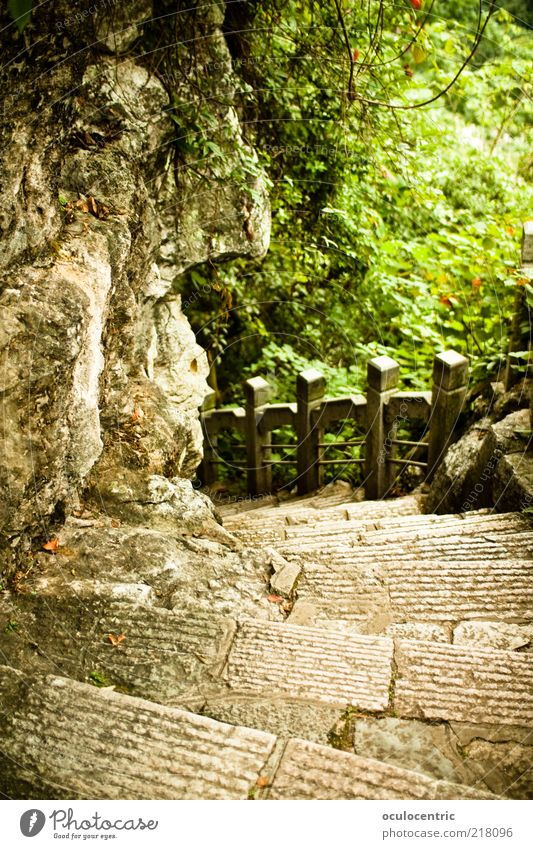Nature Plant Summer Forest Garden Stone Lanes & trails Park Environment Rock Stairs Bushes Travel photography China