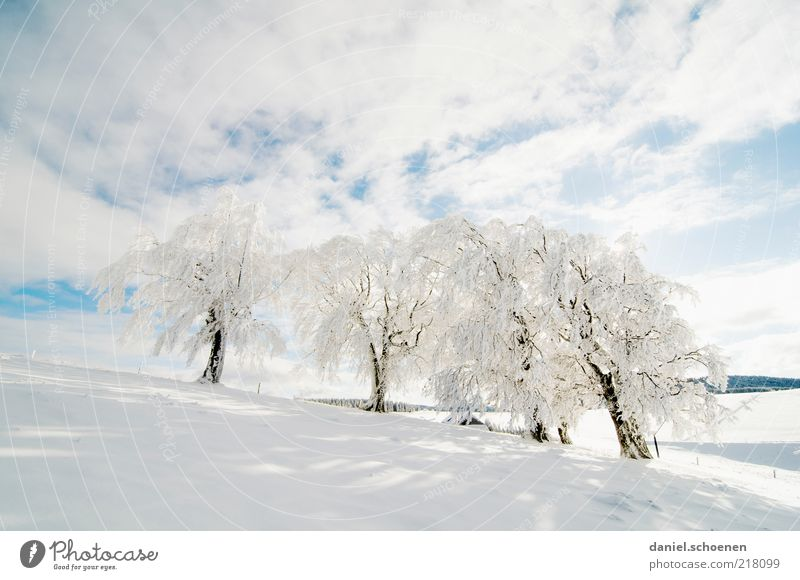 Beautiful White Tree Blue Winter Cold Snow Ice Bright Weather Esthetic Frost Climate Pure Beautiful weather Snowscape