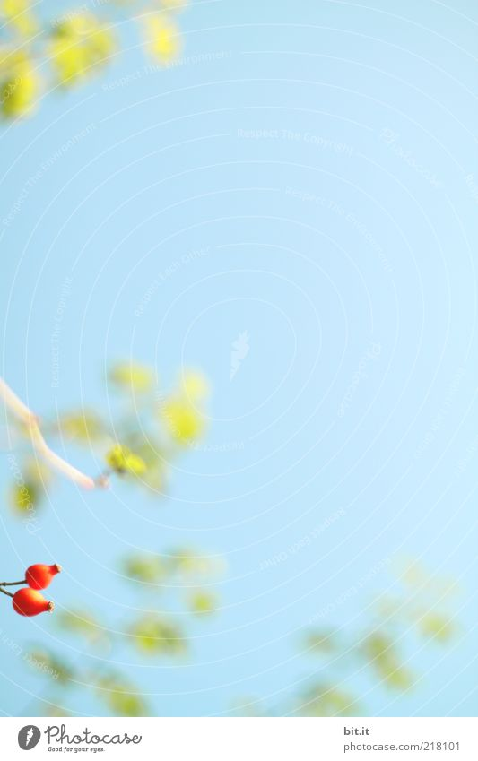 Nature Sky Green Blue Plant Red Summer Leaf Autumn Background picture Fruit Fresh Growth Bushes Wild Natural