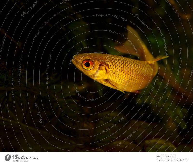 Nature Green Red Calm Black Yellow Dark Gold Fish Esthetic Swimming & Bathing Thin Wild animal Aquarium Fish eyes Roach