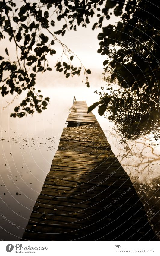 Nature Water Old Tree Calm Leaf Loneliness Autumn Wood Lake Fog Environment Broken Branch Footbridge Lakeside