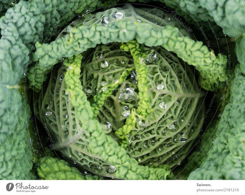 Wirsing mit Wassertropfen Kohl Gemüse gesund Ernährung gesunde Ernährung Garten Colour photo Natur vegan Vegetarian diet Healthy Eating Organic produce Fresh