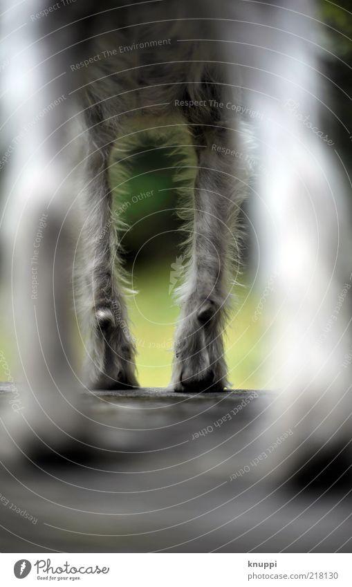 White Green Calm Black Animal Dog Legs Baby animal Wait Stand Wild Exceptional Observe Pelt Paw