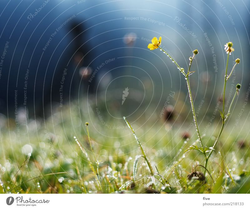 Nature Water Sky Flower Plant Yellow Cold Meadow Autumn Grass Environment Wet Drops of water Earth Bushes Damp
