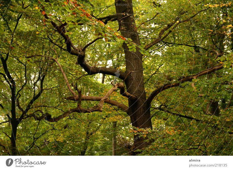 Nature Green Tree Plant Calm Autumn Environment Landscape Wood Park Brown Climate Romance Peace Mysterious Tree trunk