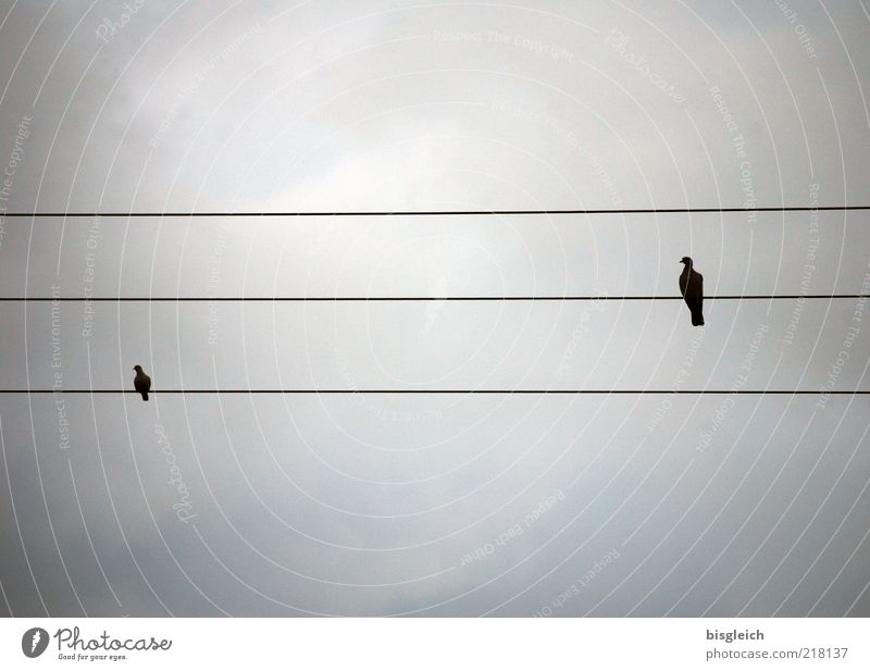 high voltage Bird 2 Animal Pair of animals Sit Calm Self Control High voltage power line Sky staff lines Musical notes Colour photo Subdued colour Exterior shot