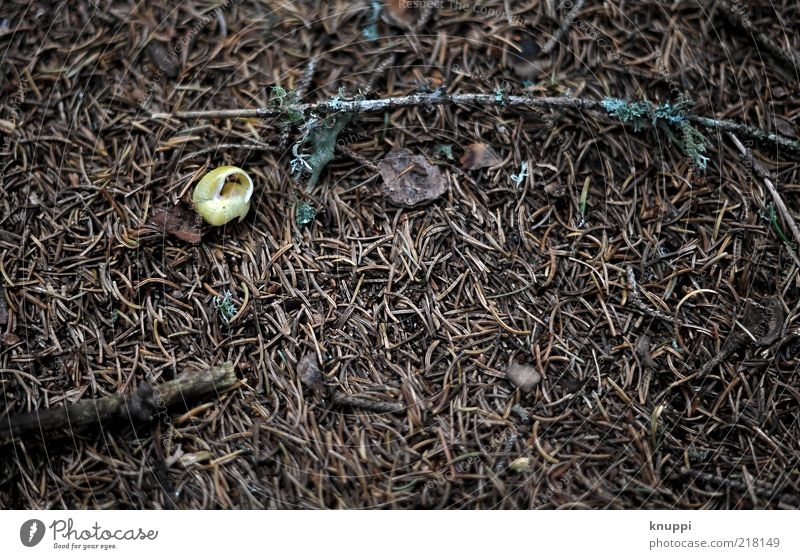 haven of peace Calm Environment Nature Animal Earth Autumn Moss Snail 1 Wood Old Lie Dark Brown Snail shell Woodground Colour photo Subdued colour Exterior shot