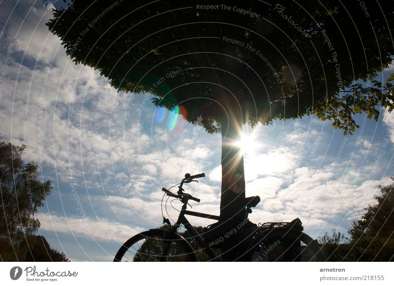 Lean your bike to a tree and enjoy the sunshine Cycling tour Sun Bicycle Nature Sky Clouds Beautiful weather Tree Serene Esthetic Relaxation Break Colour photo