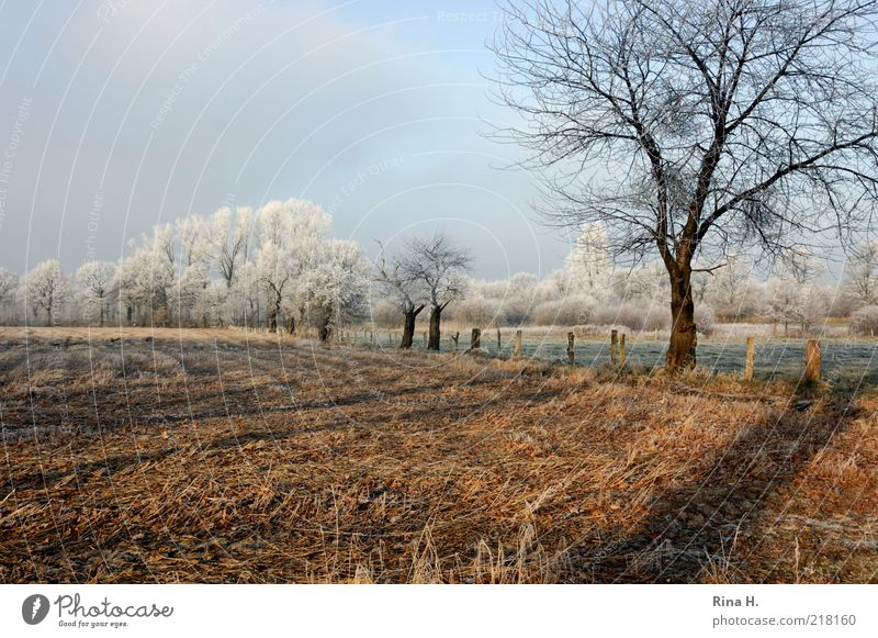 winter Nature Landscape Sky Winter Beautiful weather Meadow Field Cold Natural Calm Tree Hoar frost Frost Weather Colour photo Deserted Copy Space top Day Light