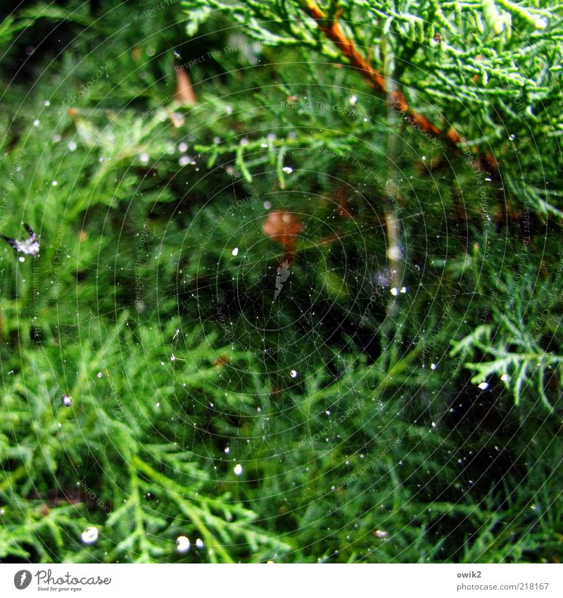Nature Beautiful White Green Plant Black Brown Glittering Small Elegant Environment Drops of water Near Simple Thin