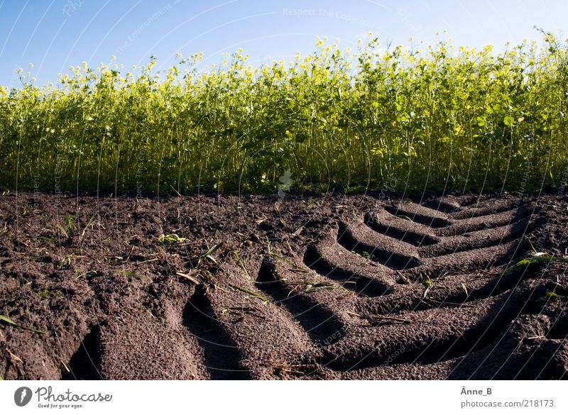 Trecker flag! Canola field Working in the fields Environment Earth Summer Autumn Beautiful weather Plant Agricultural crop Field Growth Blue Brown Yellow Green