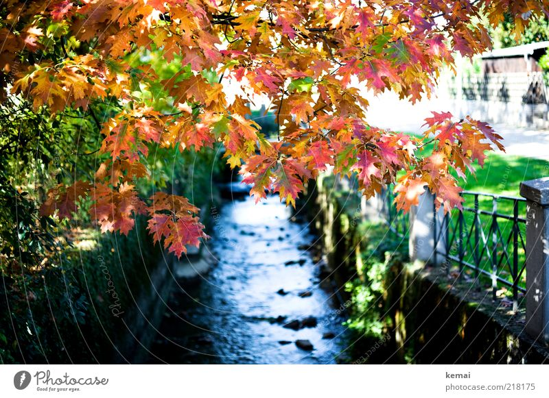 Nature Water Tree Plant Red Calm Leaf Yellow Autumn Grass Park Landscape Environment Wet Growth River