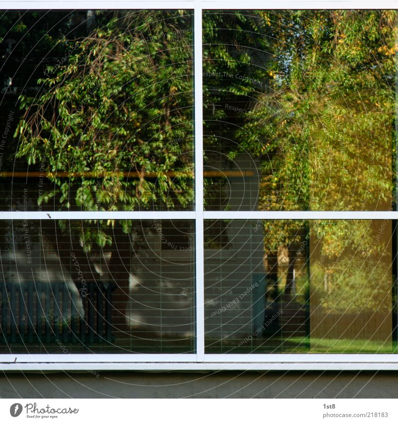 White Tree Plant House (Residential Structure) Wall (building) Window Grass Garden Wall (barrier) Building Facade Curiosity Manmade structures Tree trunk