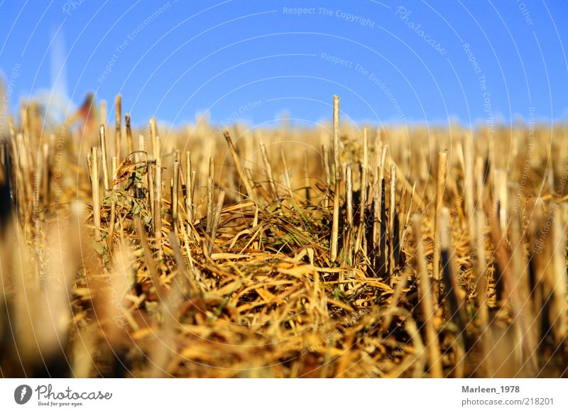 Nature Yellow Autumn Moody Field Gold Perspective Change Idyll Harvest Blue sky Stubble field