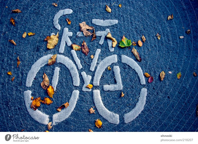 cycle Autumn Leaf Traffic infrastructure Passenger traffic Street Lanes & trails Sign Signs and labeling Road sign Movement Colour photo Evening Bird's-eye view