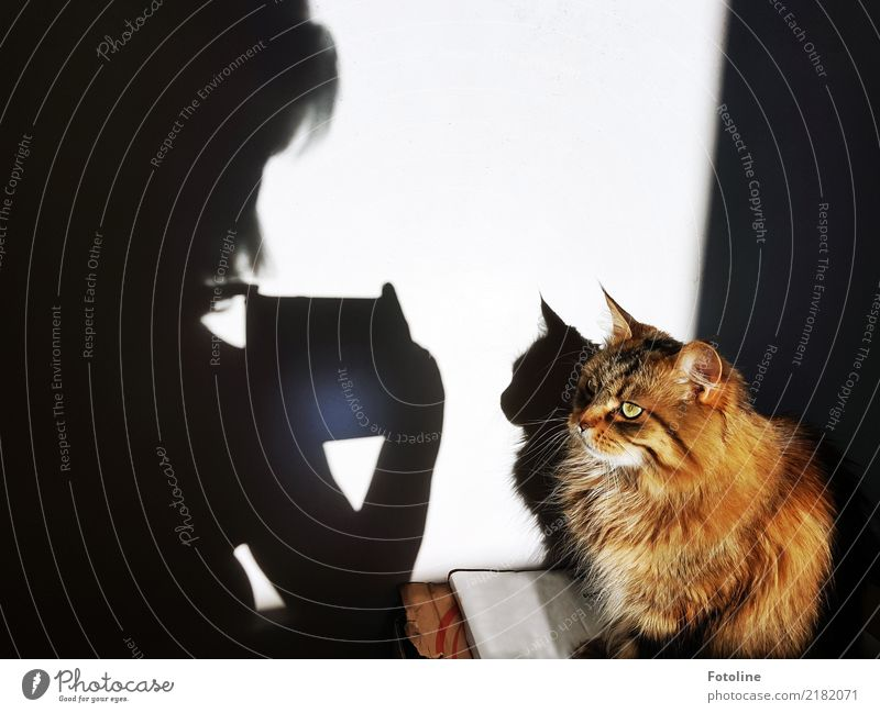 Photoshooting with cat Environment Nature Animal Pet Cat Animal face Pelt 1 Natural Warmth Soft Brown Black White Photo shoot Wall (building) Take a photo