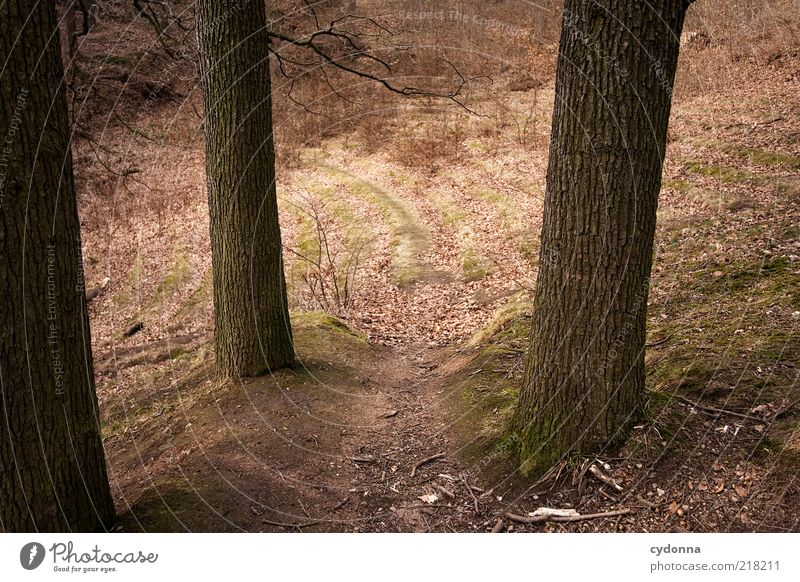 forest stage Environment Nature Autumn Tree Forest Uniqueness End Discover Mysterious Life Sustainability Calm Stagnating Dream Decline Past Transience Change